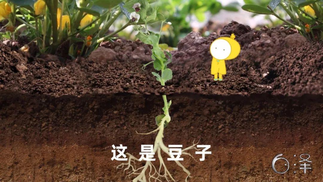 儿童科学启蒙动画片:孩子一看就会爱上的启蒙动画,让孩子赢在未来世界-第14张图片-爱课啦